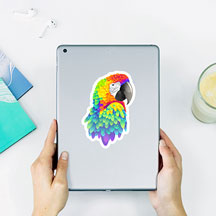 Multicolored Parrot